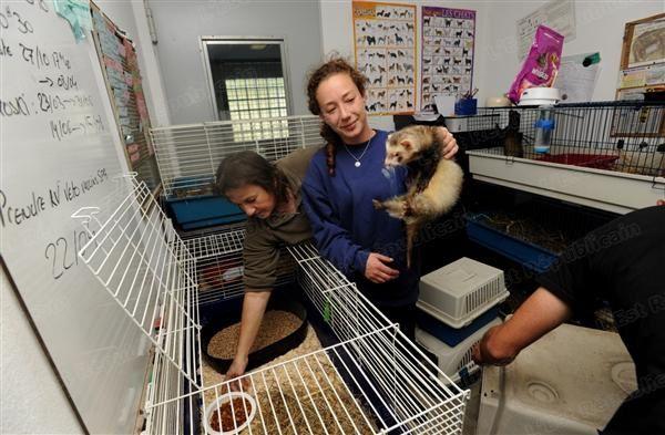 les-cages-ont-ete-nettoyees-par-les-benevoles-chaque-furet-.jpg