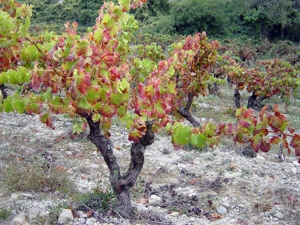 2005-10Narbonne-059.jpg