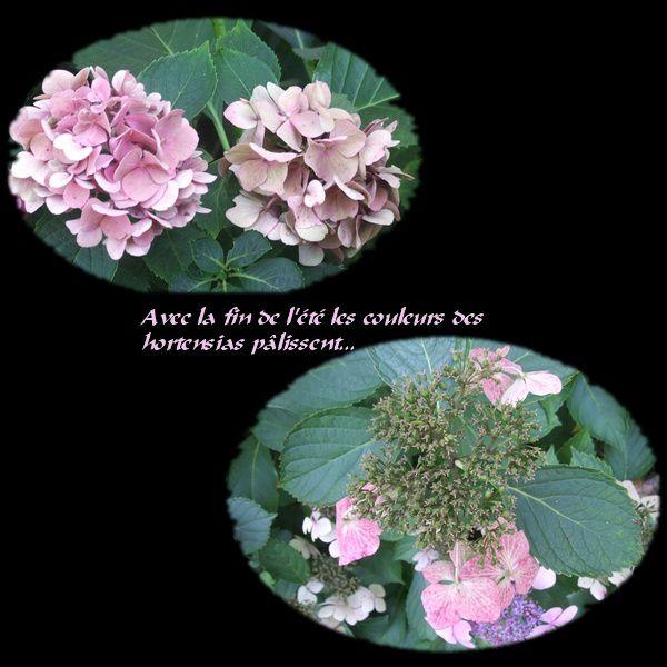 hortensia-pale.jpg