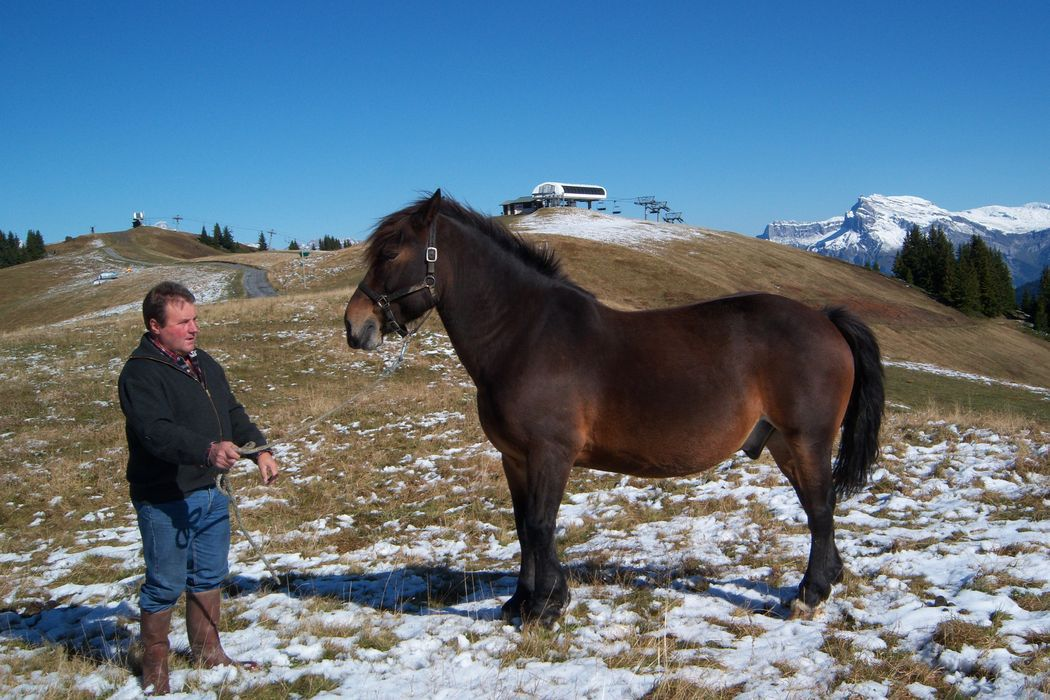 Faire Du Cheval Megeve
