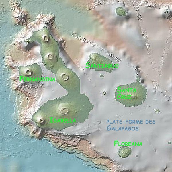 Galapagos_IS_Topo_---Ken-Mc-Donald---using-geomapapp-coutes.jpg