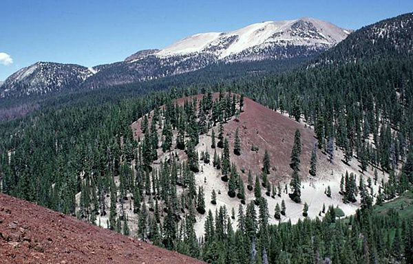Mammoth-Mountain---Red-cones--Lee-Siebert-.jpg