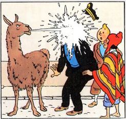 tintin-bis copie