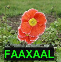 Photo gratuite : Devenir fan de Faaxaal