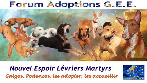 1-A-500-FORUM-ADOPTIONS-GEE.jpg