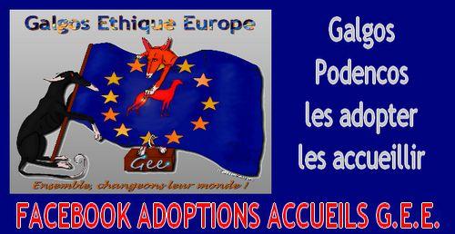 1-A-ADOPTIONS-ACCUEILS-FACEBOOK.jpg