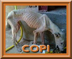 COPI-galgos-ethique-europe-240