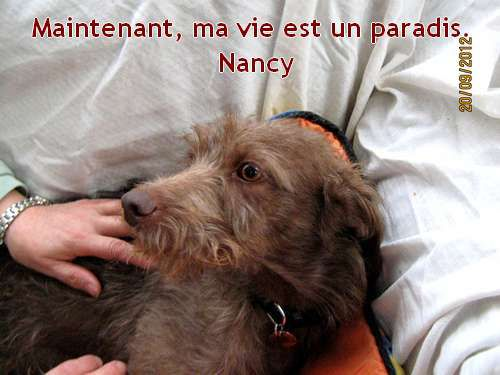 nancy-podenca-a-poils-longs-barbuda-galgos-ethique-europe-a.jpg
