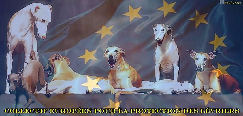 a-collectif-europeen-protection-levriers-frederique-500.jpg