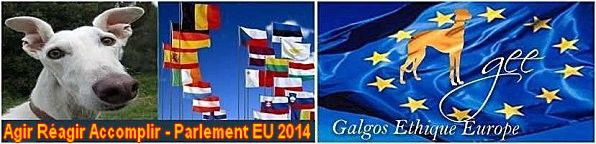 elections-europeennes-2014-parlement-europeen-galgos-ethiqu