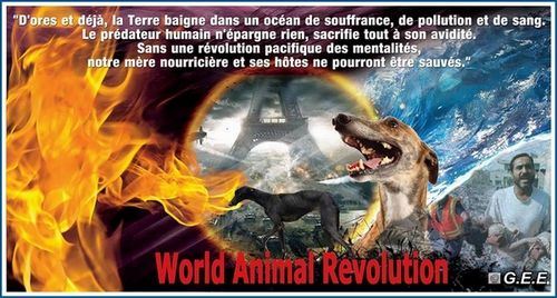 500-world-animal-revolution-galgos-ethique-europe-fred-orig