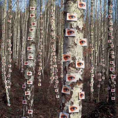 Storm-Thorgerson-Eyes-on-Trees