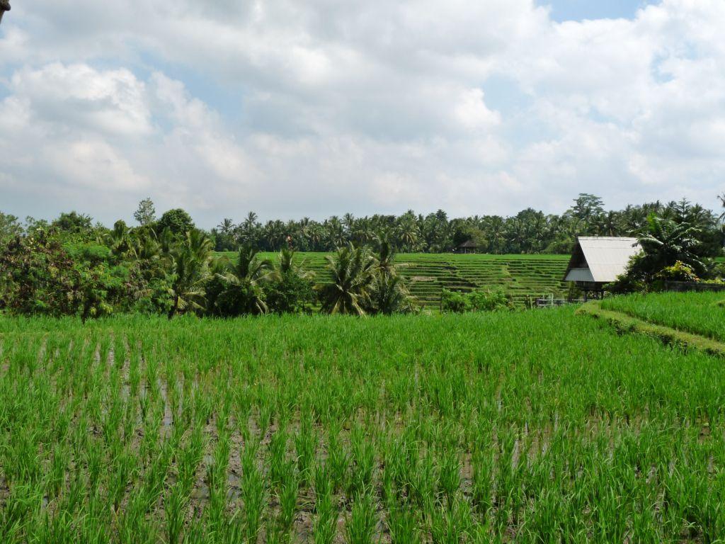 7-Indonésie 2010