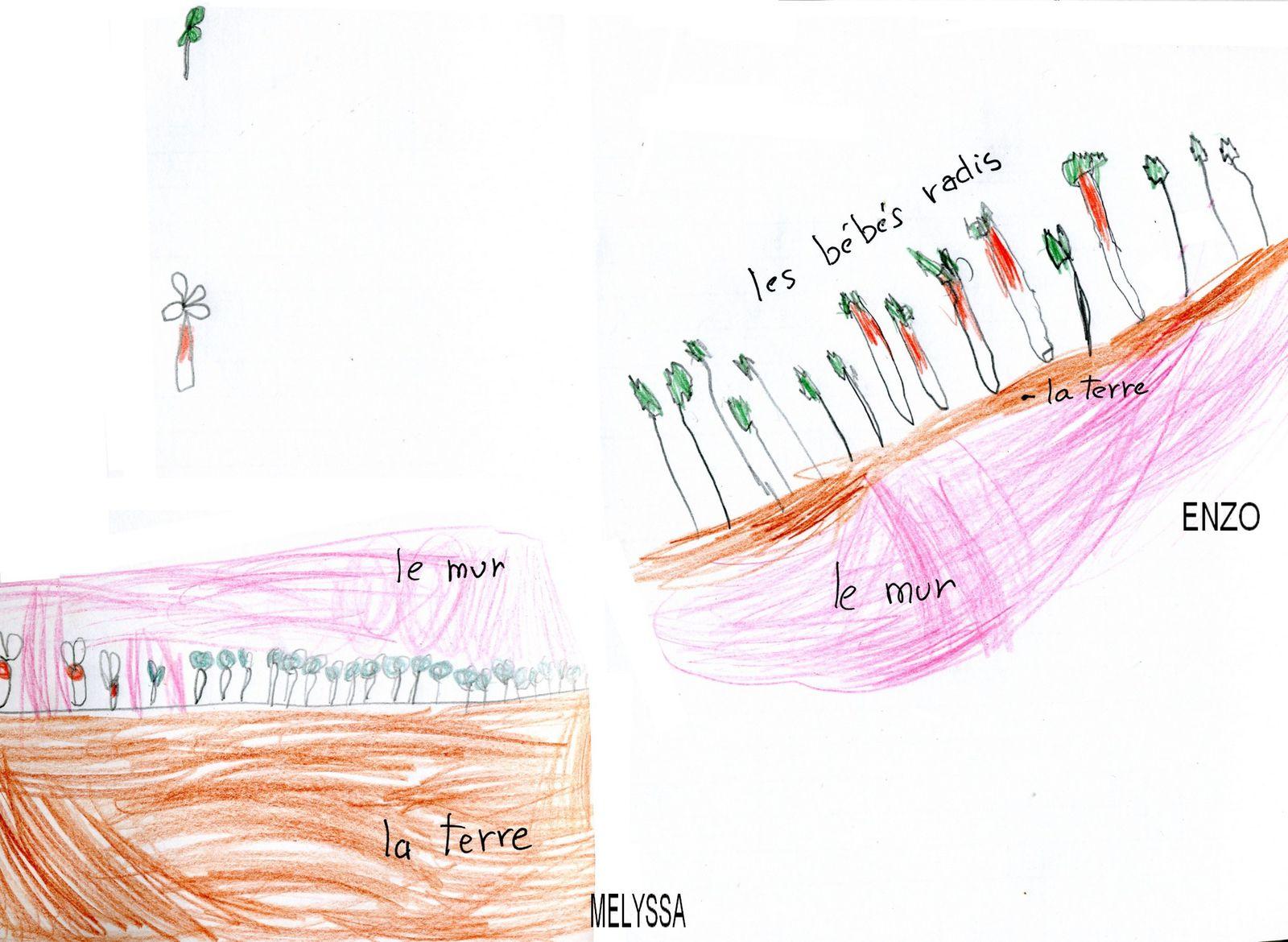 Photos/Album - LE JARDIN DE LA CLASSE