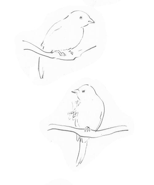 oiseaux3.jpg