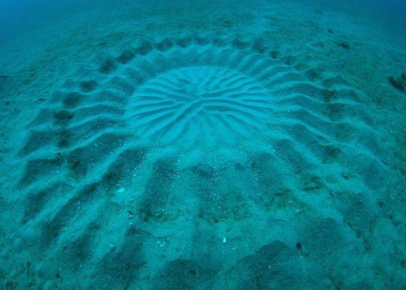 underwater-mystery-circle