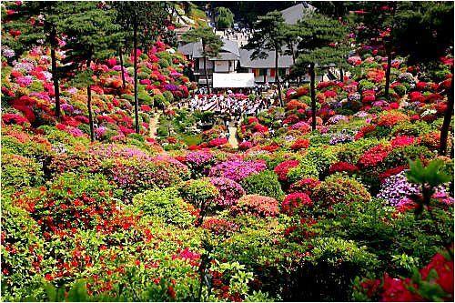 Jardin nature fleurs festival de l 39 azal e shiofune au for Le jardin des fleurs