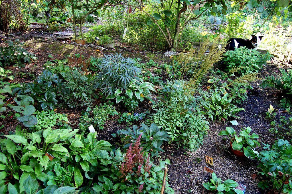 Au jardin d 39 ombre un banc un chien un chat le jardin de nanny 2 for Jardin ombre et lumiere