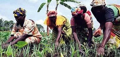 biopact_congo_agriculture.jpg