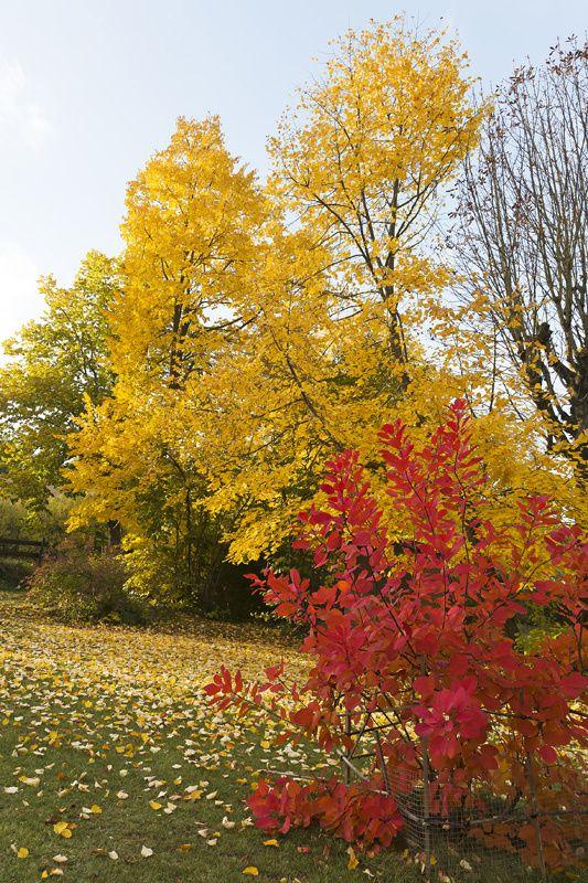 Jardin-d-automne