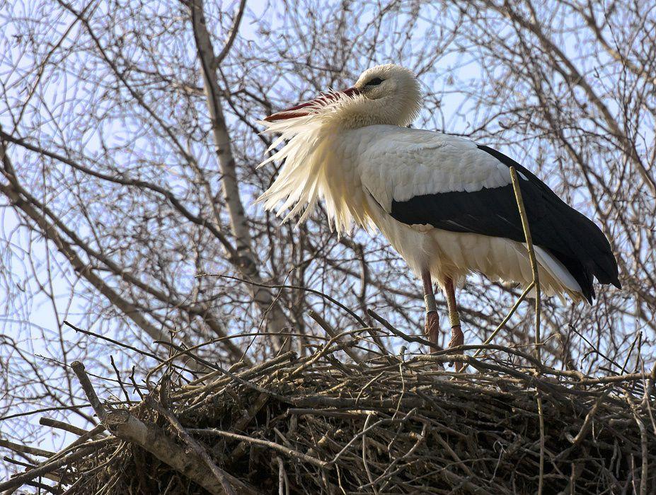 Les oiseaux de la-Dombes