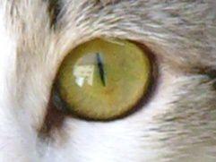 oeil du chat 04