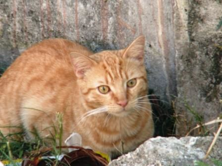 chatte rousse 16