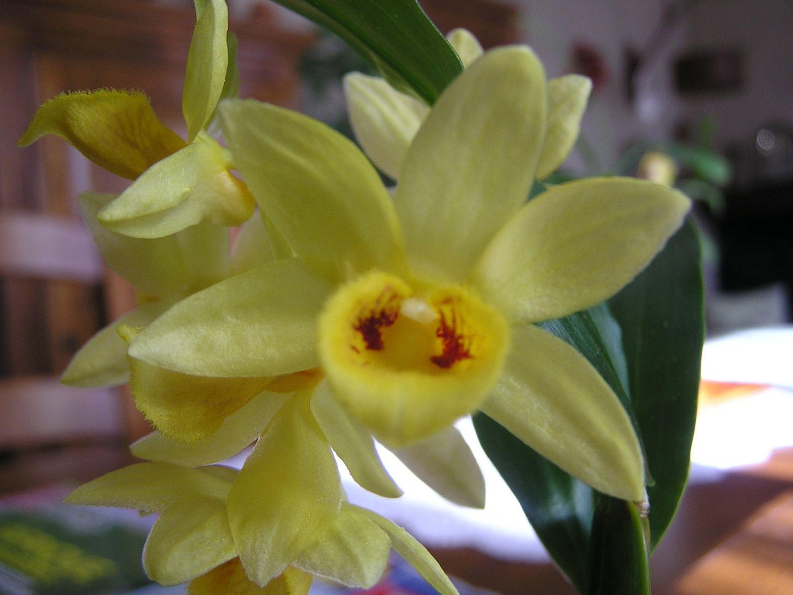 Orchidées exotiques, et endémiques cimenteront cet album de photos de collection personnelle.