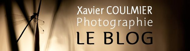 > Xavier COULMIER Photographies - Le BLOG