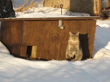 Winter Box For Ferral Cat
