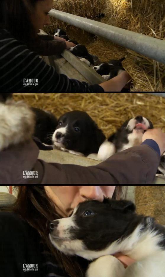 raymond bébés chiens