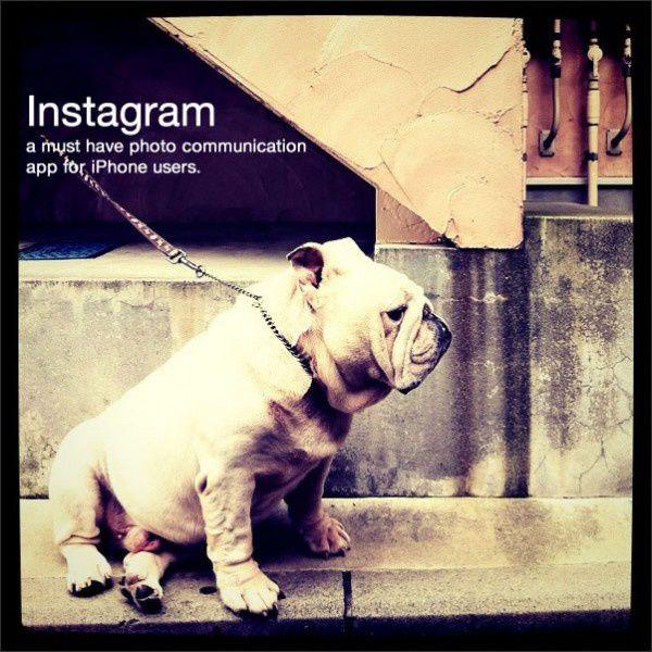 instagram-600x600.jpg