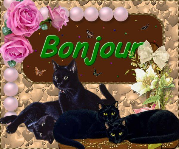 chats-noirs.jpg