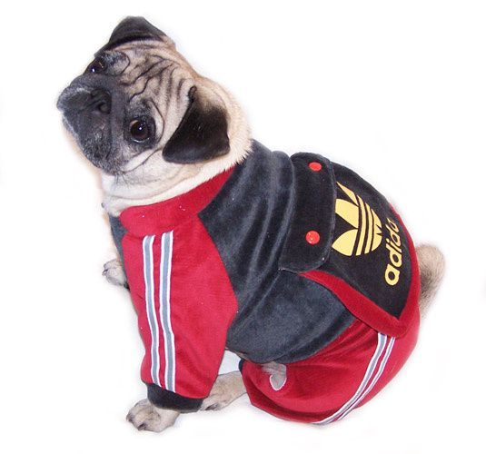 sweat adidas chien