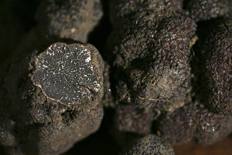 truffes-copie-1.jpg
