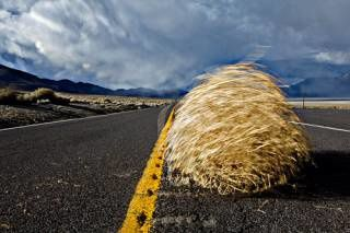 tumbleweed ou virevoltant in natures paul keirn
