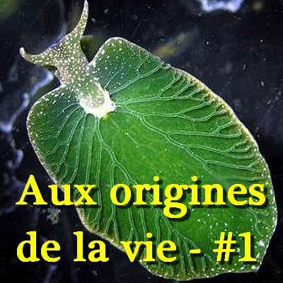 Les-origines-de-la-vie-in-natures-paul-keirn.jpg