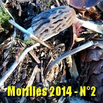 morilles-2014---N-2.jpg