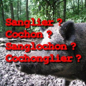 cochon sanglier sanglochon cochonglier in paul keirn nature