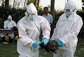 grippe-aviaire.jpg