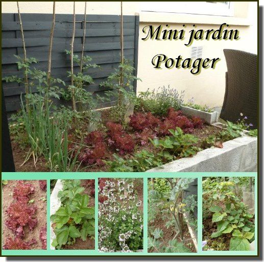 Jardin-potager.jpg