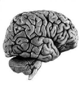 Le-cerveau-transmet-l-info-elle-n-est-pas-la-raison--Ackerm.JPG