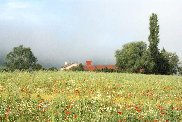brouillard-matinal-ferme.jpg