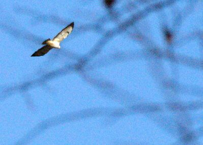 buse variable moncel