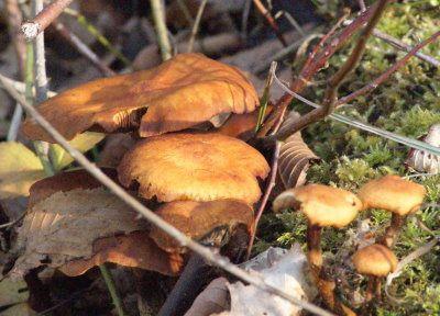champignons automne07