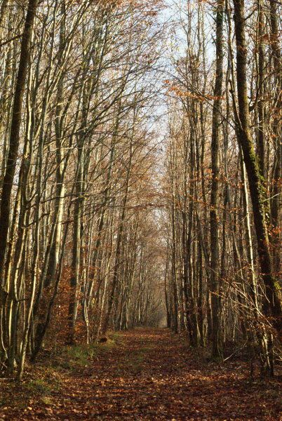chemin moncel fin automne01
