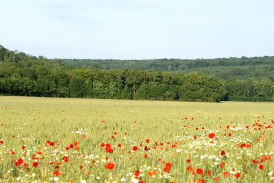 cereales-et-coquelicots-val-ane-a.jpg