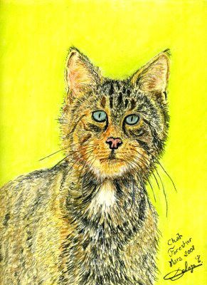 dessin-chat-forestier.jpg
