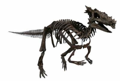 draco-rex-howgartia-1370681898_small.jpg