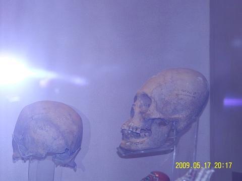 cranes-Musee-d-anthropologie-de-Mexico-tete-ovoide-de-w.jpeg